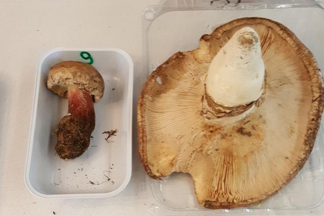 Pilztest für alle 4